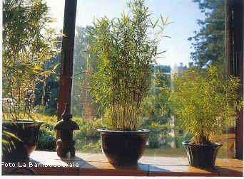 Il Bambù: creare barriere, siepi e arredare il giardino